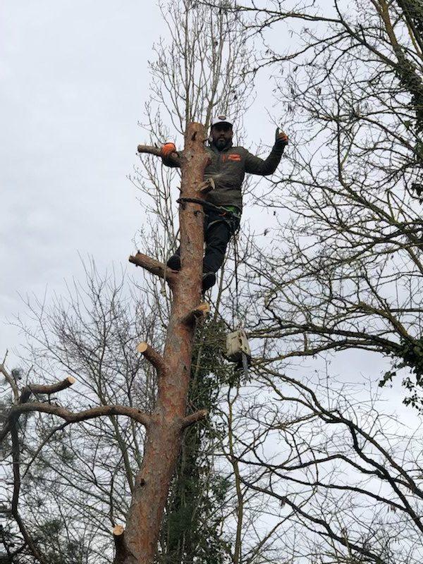abatage arbres